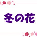 折り紙で冬の花(12月・1月・2月)の簡単な折り方・作り方!