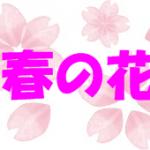 折り紙で春の花(3月・4月・5月)の簡単な折り方・作り方!